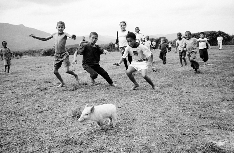 Photo of Children chasing pig at the Griekwe Sports Day, Knysna, Western Cape, 2001